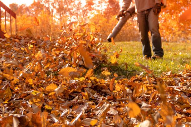 Fall Leaf Removal