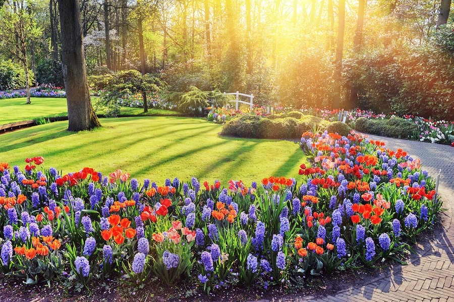 Spring Lawn Care Services
